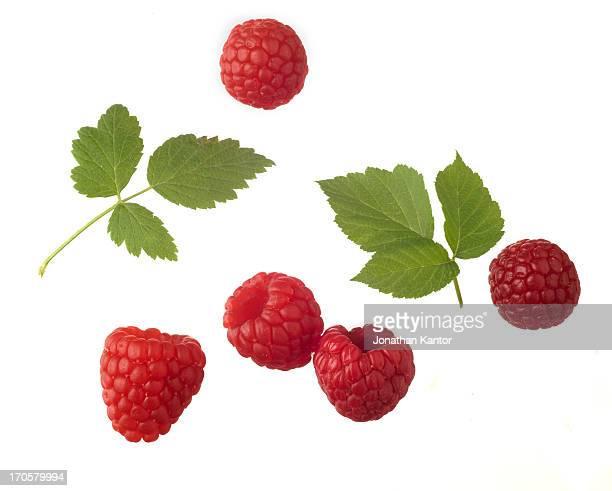 Rasberries with Leaves