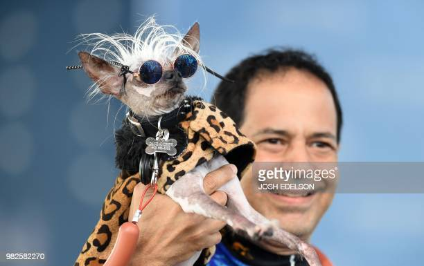 Rascal Deux a Chinese Crested wears sunglasses while being held up by his owner Dane Andrew during The World's Ugliest Dog Competition in Petaluma...