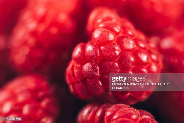 raspberries - antioxidant stock pictures, royalty-free photos & images
