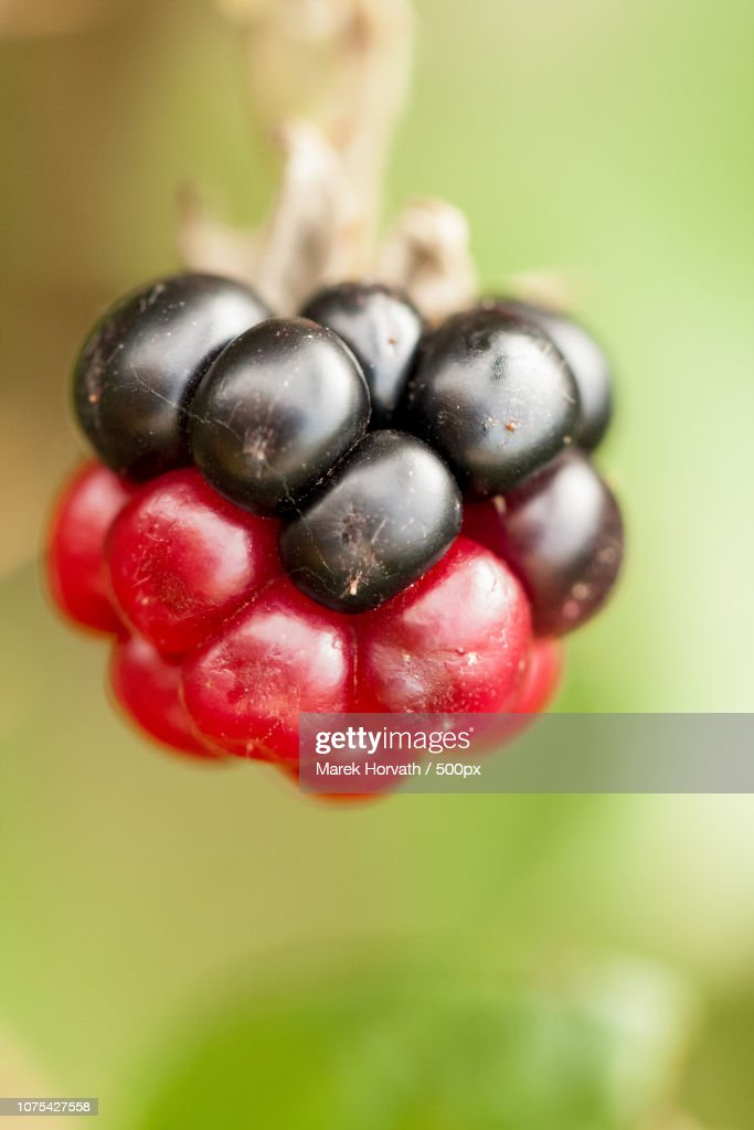 raspberry red and black : Stock Photo