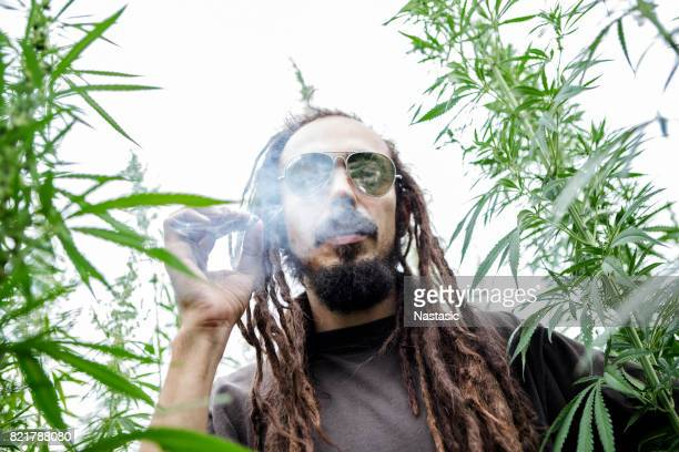 Rastafarian smoking marijuana joint in cannabis field