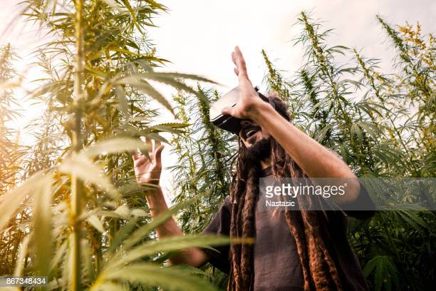 Rastafarian with VR headset in cannabis field smiling