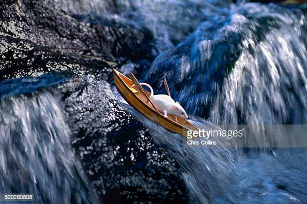 rat abandoning sinking ship - 一匹 ストックフォトと画像