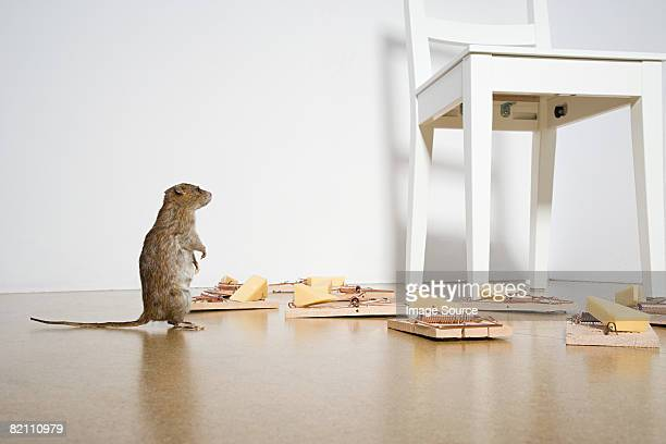 Rat and mousetraps