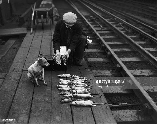 A rat catcher lays out his victims on the tracks outside Euston Station in London 7th November 1939