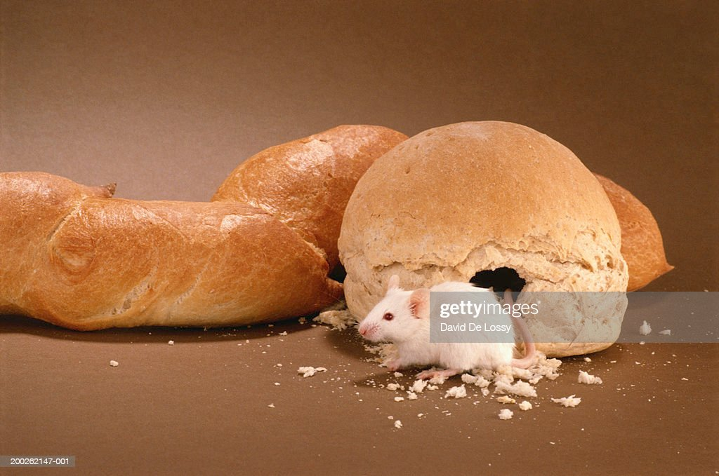 Rat sitting besides bun : Stock Photo