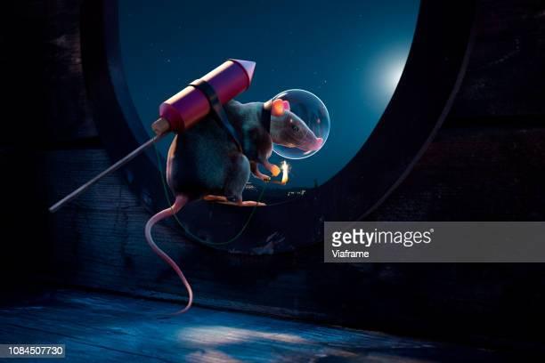 rat with rocket - ratazana - fotografias e filmes do acervo