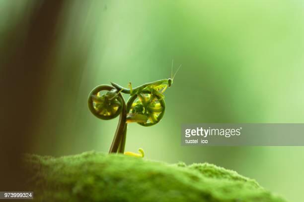 rate my bike