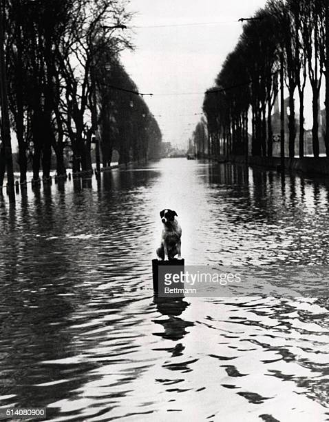 Rather than risk getting wet Monty the prized pet of a Walthamstow resident chooses to wait out the flood on top of a floating pail