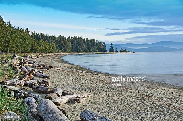 rathtrevor park and  beach scene - british columbia stock pictures, royalty-free photos & images