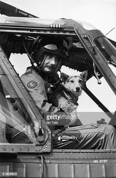 Rats the corgi dog and mascot of the Welsh Guards takes off by helicopter from Elizabeth Barracks Pirbright Camp Woking 9th April 1980 He is retiring...