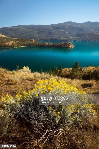 Rattlesnake point and common rabbit brush and Kalamalka Lake, British Columbia, Canada