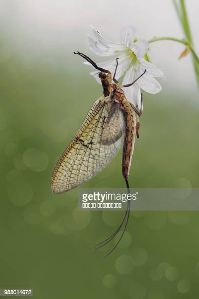 rave - mayfly stock pictures, royalty-free photos & images