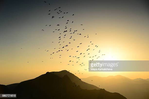 Raven flock at sunrise in a mountain