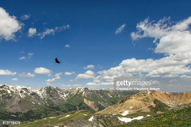 Raven Flying in the Blue Sky with Mountains
