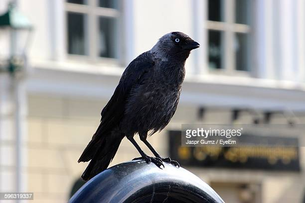 raven perched on railing - perching stock pictures, royalty-free photos & images