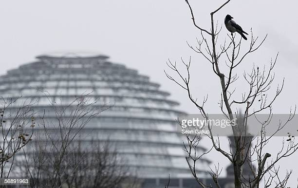 A raven perches in a tree in front of the cupola of the Reichstag on February 20 2006 in Berlin Germany Germany is scrambling to cope with an...