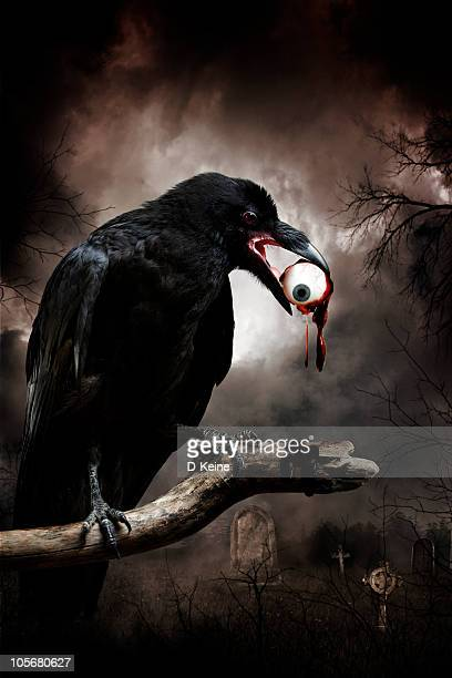 raven - ravens stock photos and pictures