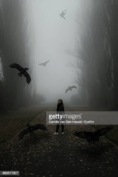 ravens flying around woman standing on street during foggy morning - raven bird stock photos and pictures