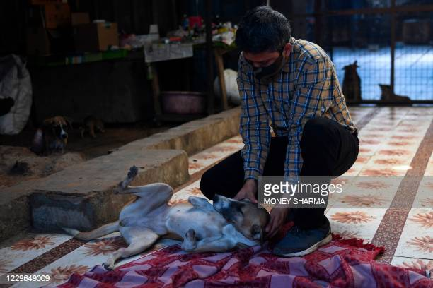 Ravi Dubey, founder of People for Animals Trust is seen with Rocky, plays with Rocky a female dog who lost her front legs in a train accident, in...