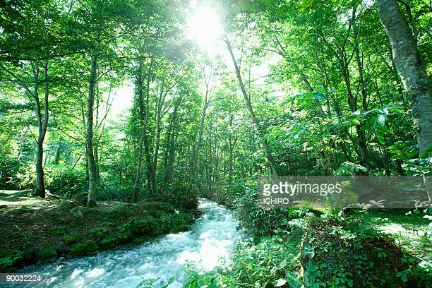 a ravine between trees. - japanese tree stock photos and pictures