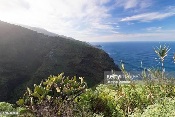 Ravine of Garafía (North of La Palma island. Canaries. Spain)