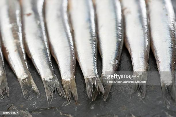 Raw anchovies, cropped