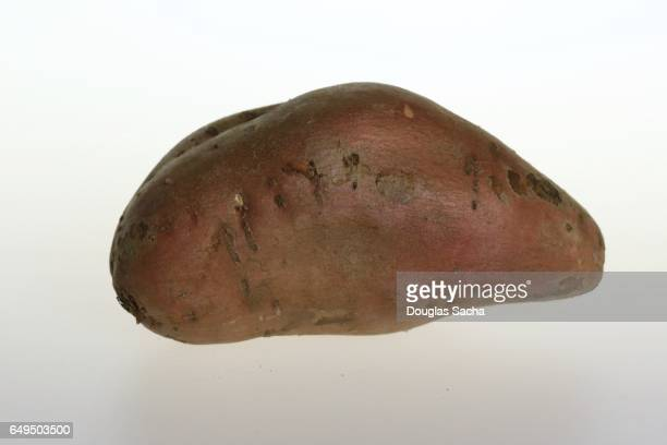 Raw and uncooked Sweet potato (Ipomoea batatas)
