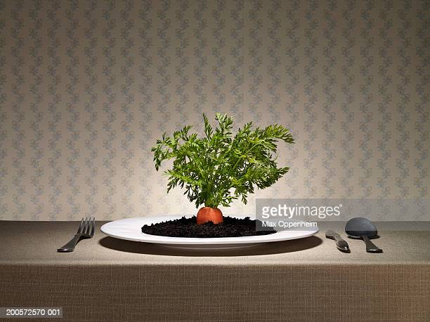 Raw carrot top and earth served on plate