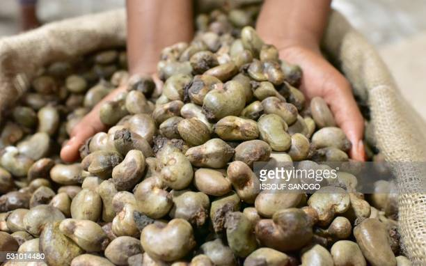 Raw cashew nuts are checked at a warehouse on May 12 in Abidjan as the Cashew nut season begins The Ivory Coast produces some 725000 tonnes of the...