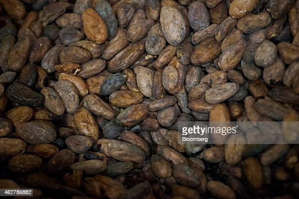 Raw cocoa beans sit in a pile before processing at the Theo Chocolate factory in Seattle Washington US on Monday Feb 2 2015 The US Census Bureau is...