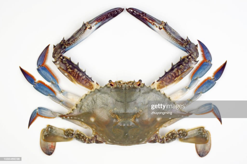 Raw crab : Stock Photo