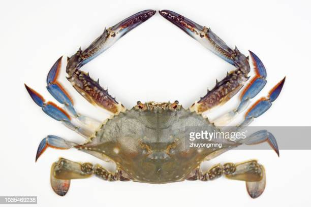 raw crab - crab stock pictures, royalty-free photos & images