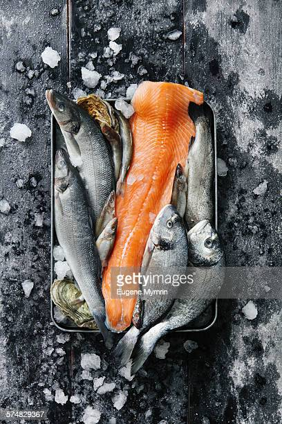 raw fish and oysters in tray - raw food stock pictures, royalty-free photos & images