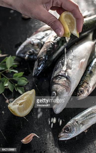 raw fish. sea bream, sea bass, mackerel and sardines, squeezing lemon - sardine foto e immagini stock