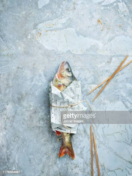 raw fish wrapped in newspaper - perch fish stock pictures, royalty-free photos & images