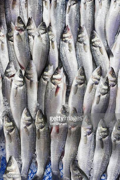 Raw fresh fish Levrek also European seabass on sale in food market in Kadikoy district on Asian side of Istanbul East Turkey