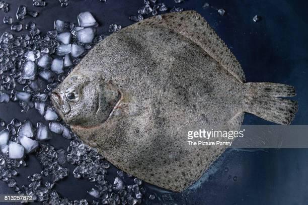 raw fresh tuna fish - フラットフィッシュ ストックフォトと画像