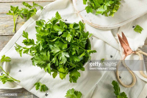 raw green organic italian flat leaf parsley - flat leaf parsley stock photos and pictures