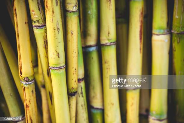 raw green sugar cane - sugar cane stock pictures, royalty-free photos & images