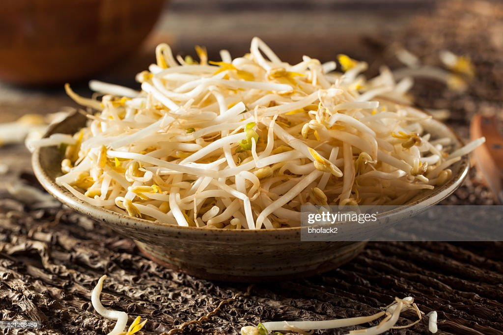 Raw Healthy White Bean Sprouts : Stock Photo
