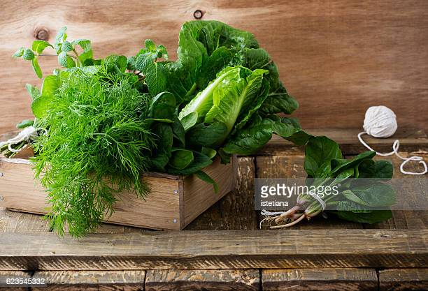 raw organic leafy green foods - romaine lettuce stock photos and pictures