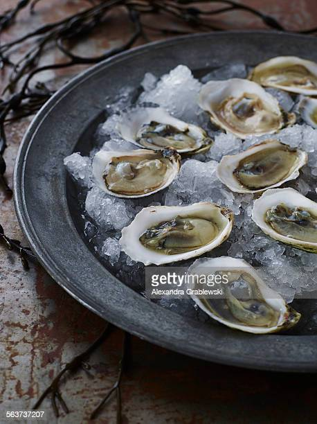 Raw Oysters over Ice