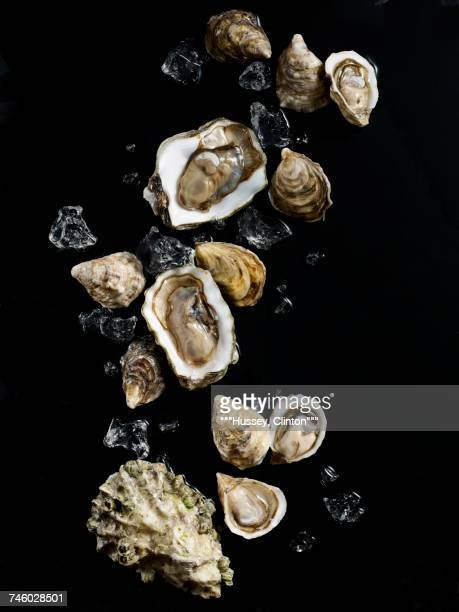 Raw oysters with ice cubes on a black surface