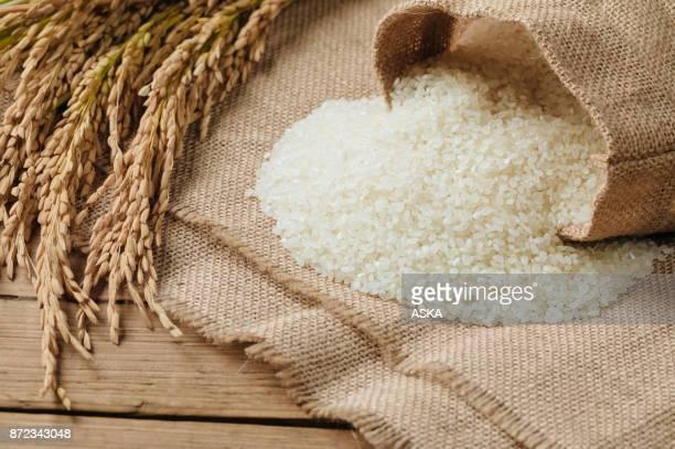 Granos de arroz crudo y plantas de arroz seco en mesa de madera