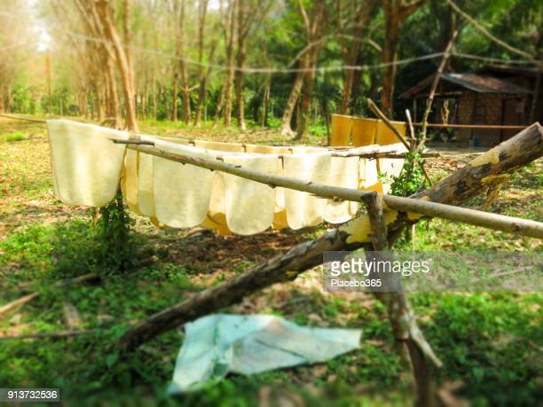 Ruwe rubber van plantage ingedrukt en drogen