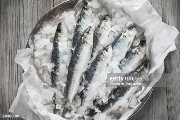 raw sardines on ice - crushed ice stock pictures, royalty-free photos & images