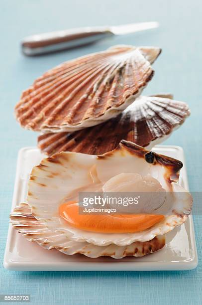 Raw scallops in shell