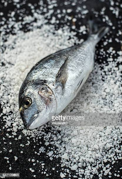 Raw sea bream fish on salt