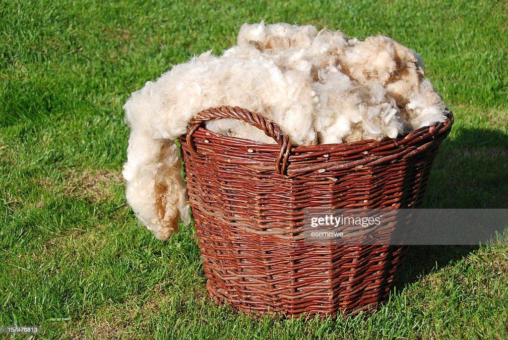 raw sheep wool : Stock Photo
